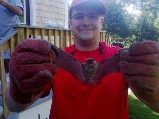 bat removal plympton & plymouth ma